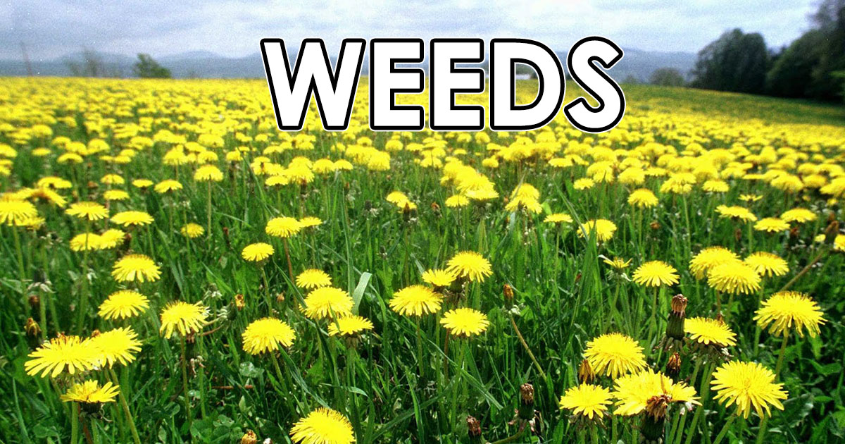 weeds OpenGraph Image